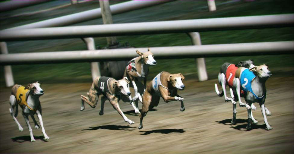 Dog racing betting games giocata con errore goldbetting